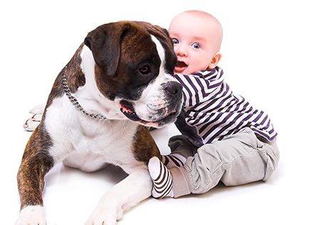 cão criança