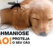 lesh-dog