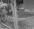 vandalismo-pinhal-site