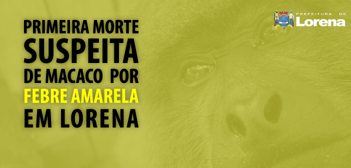 macaco-morto-site