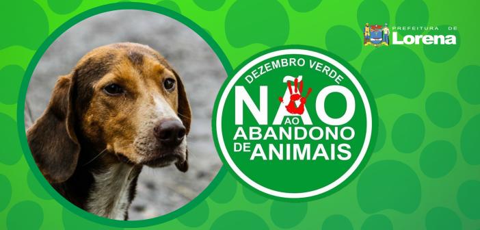 Dezembro Verde: Abandono e maltrato de animais é crime!
